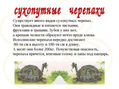 Существует много видов сухопутных черепах. Они травоядные и питаются листьями...