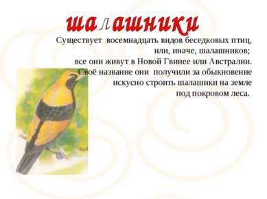 Существует восемнадцать видов беседковых птиц, или, иначе, шалашников; все он...