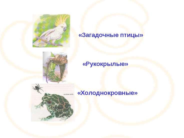 «Рукокрылые» «Загадочные птицы» «Холоднокровные»