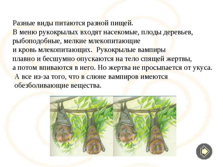 Разные виды питаются разной пищей. В меню рукокрылых входят насекомые, плоды ...
