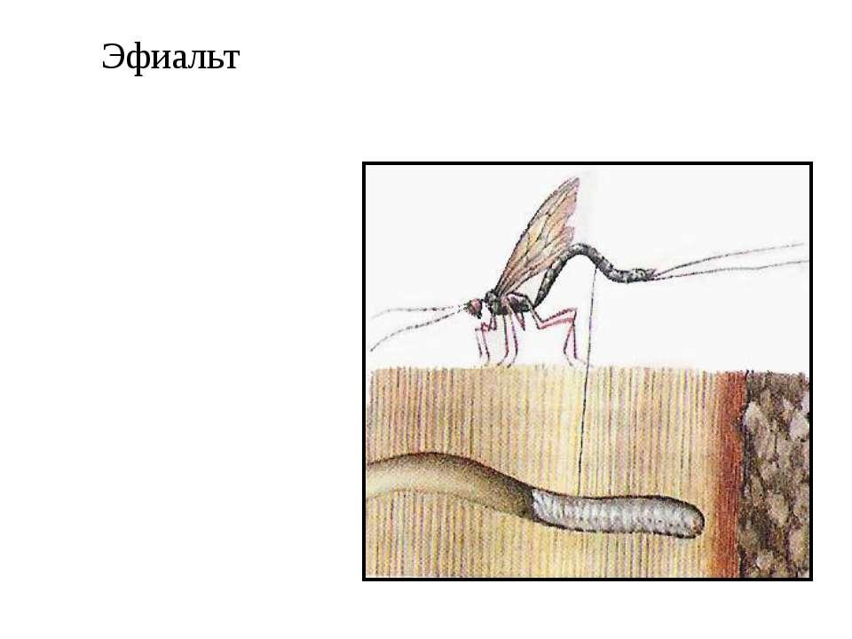 Эфиальт