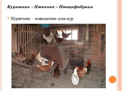 Курятник – Птичник – Птицефабрика Курятник – помещение для кур