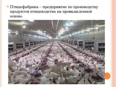 Птицефабрика – предприятие по производству продуктов птицеводства на промышле...