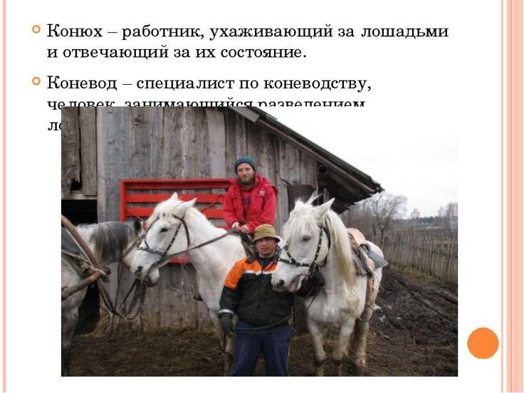 Конюх – работник, ухаживающий за лошадьми и отвечающий за их состояние. Конев...