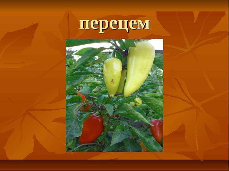 перецем