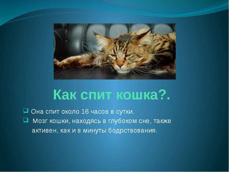 Как спит кошка?. Она спит около 16 часов в сутки. Мозг кошки, находясь в глуб...
