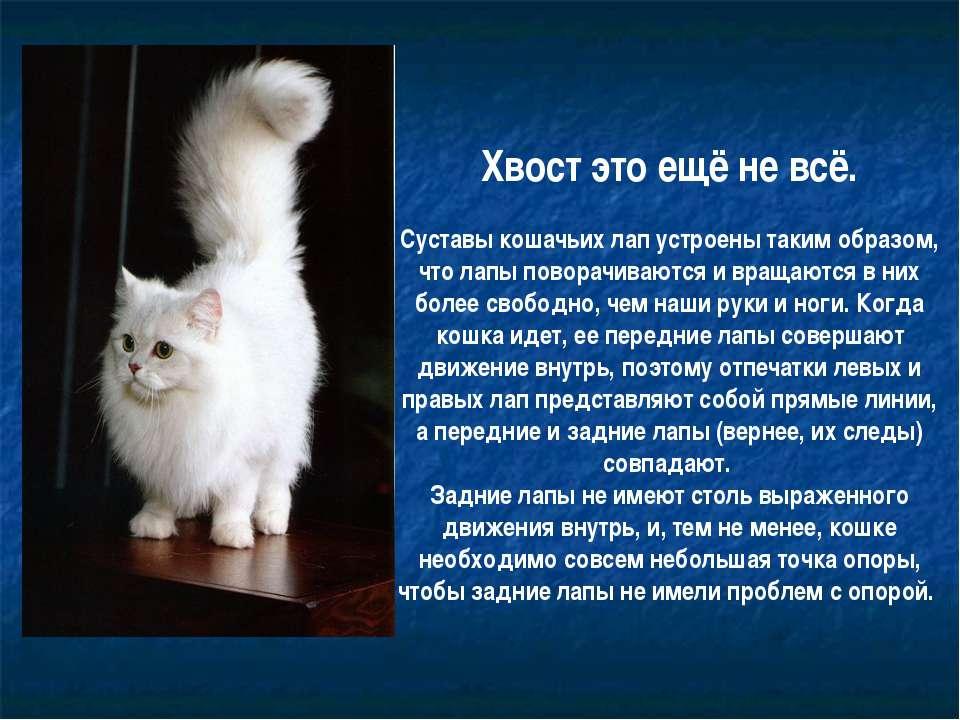 Хвост это ещё не всё. Суставы кошачьих лап устроены таким образом, что лапы п...