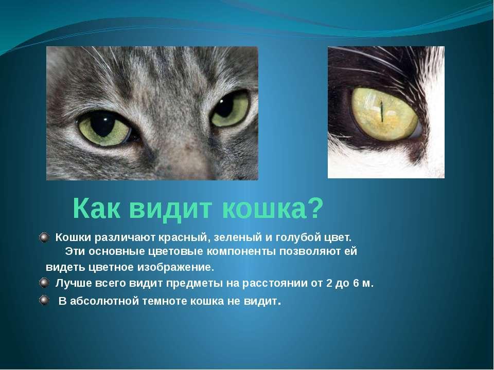 Как видит кошка? Кошки различают красный, зеленый и голубой цвет. Эти основны...