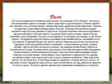 Пион Согласно историческим источникам пион получил своё название в честь Пеон...