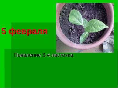 5 февраля Появление 3-4 листочка
