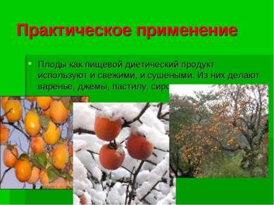 Практическое применение Плоды как пищевой диетический продукт используют и св...