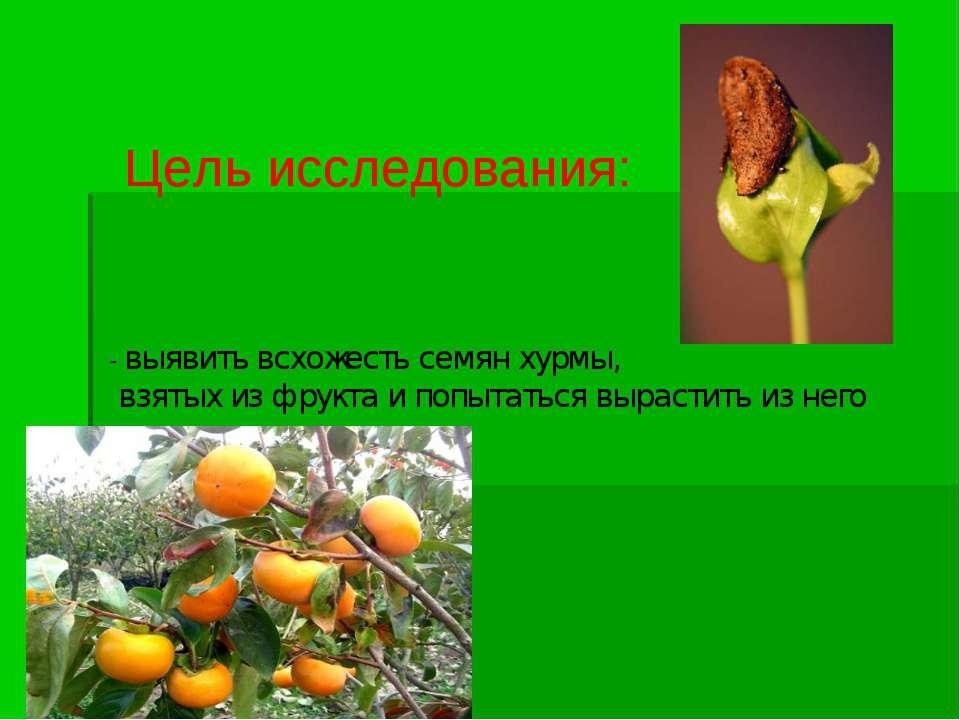 Цель исследования: - выявить всхожесть семян хурмы, взятых из фрукта и попыта...