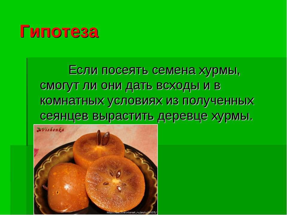 Гипотеза Если посеять семена хурмы, смогут ли они дать всходы и в комнатных у...