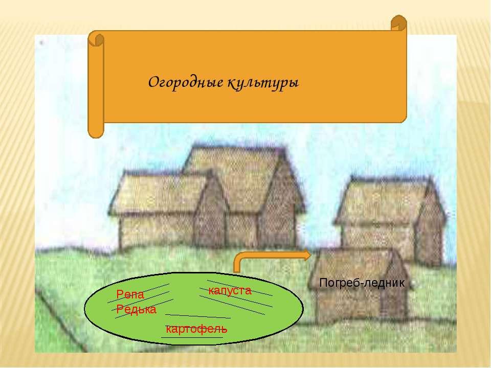 Огородные культуры Репа Редька капуста картофель Погреб-ледник