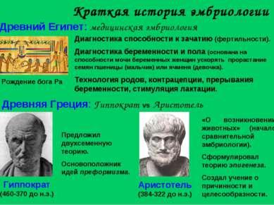 Краткая история эмбриологии Древняя Греция: Гиппократ vs Аристотель Аристотел...