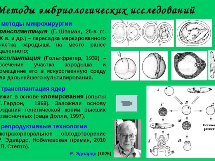 Методы эмбриологических исследований методы микрохирургии Трансплантация (Г....