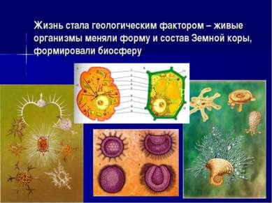 Жизнь стала геологическим фактором – живые организмы меняли форму и состав Зе...