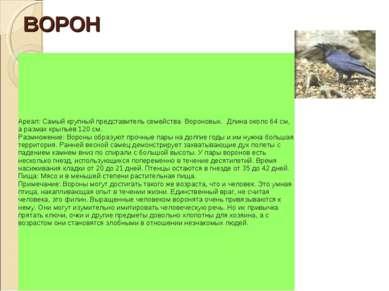 ВОРОН Ареал: Самый крупный представитель семейства Вороновых. Длина около 6...