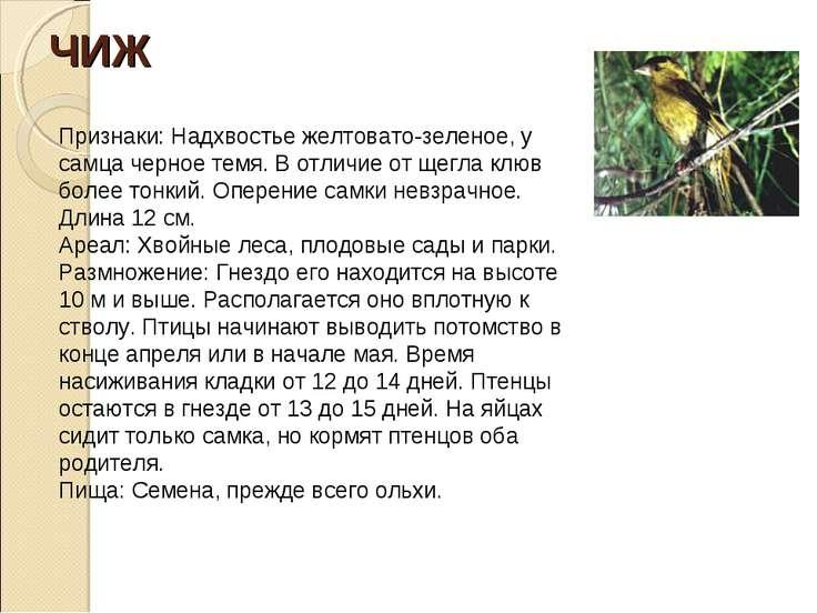 ЧИЖ Признаки: Надхвостье желтовато-зеленое, у самца черное темя. В отличие от...