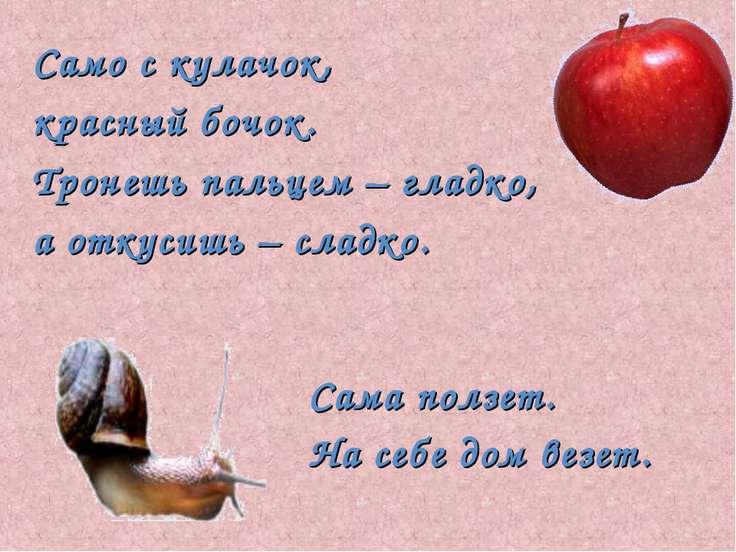 Само с кулачок, красный бочок. Тронешь пальцем – гладко, а откусишь – сладко....