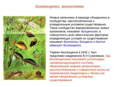 Биогеоценоз, экосистема Живые организмы в природе объединены в сообщества, пр...