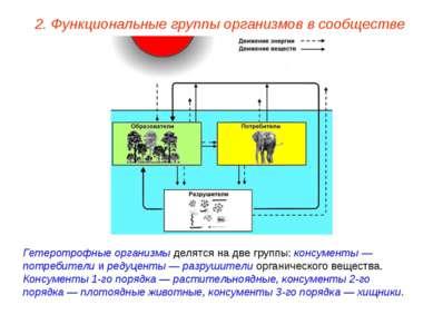2. Функциональные группы организмов в сообществе Гетеротрофные организмы деля...