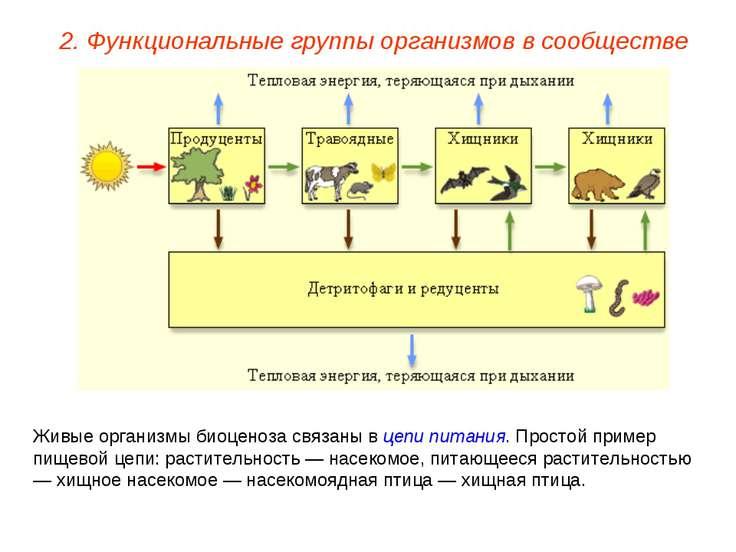 2. Функциональные группы организмов в сообществе Живые организмы биоценоза св...