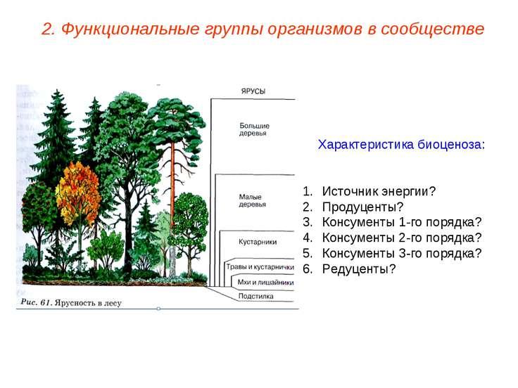 Характеристика биоценоза: Источник энергии? Продуценты? Консументы 1-го поряд...