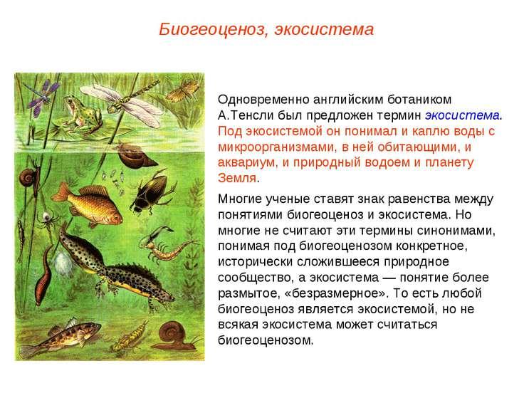 Биогеоценоз, экосистема Одновременно английским ботаником А.Тенсли был предло...