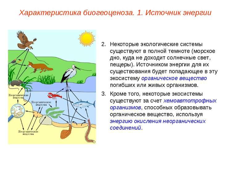Некоторые экологические системы существуют в полной темноте (морское дно, куд...