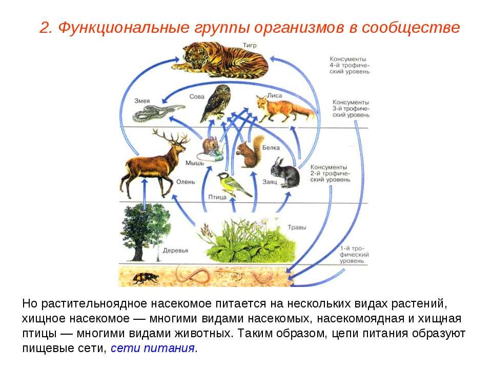 2. Функциональные группы организмов в сообществе Но растительноядное насекомо...