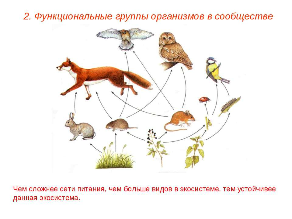 2. Функциональные группы организмов в сообществе Чем сложнее сети питания, че...