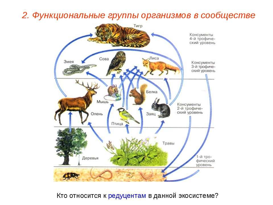 2. Функциональные группы организмов в сообществе Кто относится к редуцентам в...