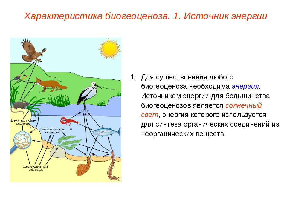 Характеристика биогеоценоза. 1. Источник энергии Для существования любого био...