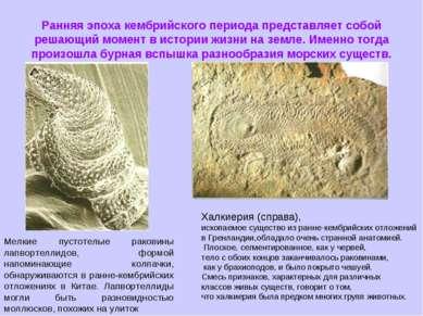 Ранняя эпоха кембрийского периода представляет собой решающий момент в истори...