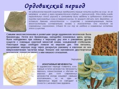 Ордовикский период В ордовикском периоде животные предприняли первые попытки ...