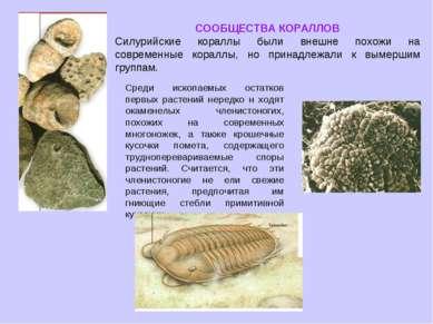 СООБЩЕСТВА КОРАЛЛОВ Силурийские кораллы были внешне похожи на современные кор...