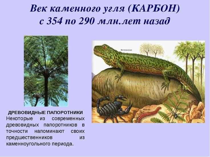 Век каменного угля (КАРБОН) с 354 по 290 млн.лет назад ДРЕВОВИДНЫЕ ПАПОРОТНИК...