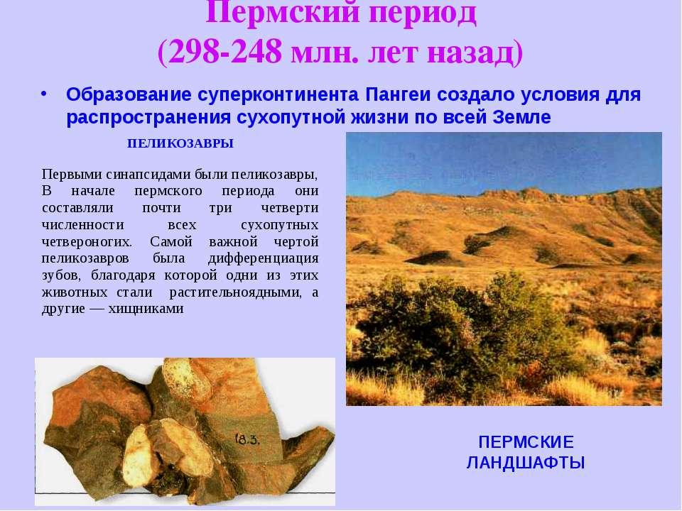 Пермский период (298-248 млн. лет назад) Образование суперконтинента Пангеи с...