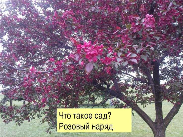 Что такое сад? Розовый наряд.