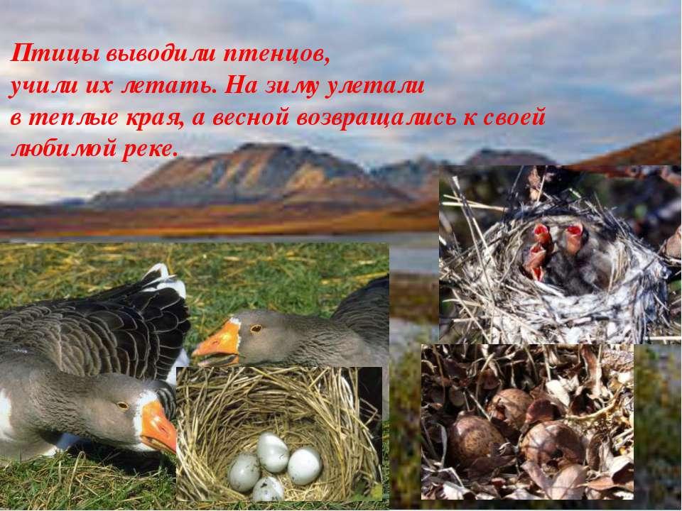 Птицы выводили птенцов, учили их летать. На зиму улетали в теплые края, а вес...
