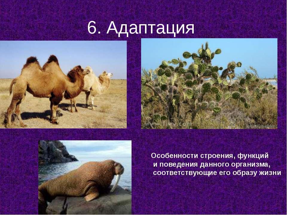 6. Адаптация Особенности строения, функций и поведения данного организма, соо...