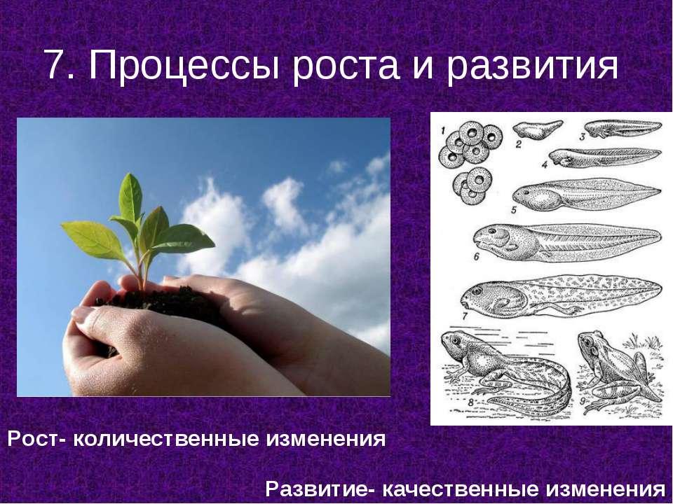 7. Процессы роста и развития Рост- количественные изменения Развитие- качеств...