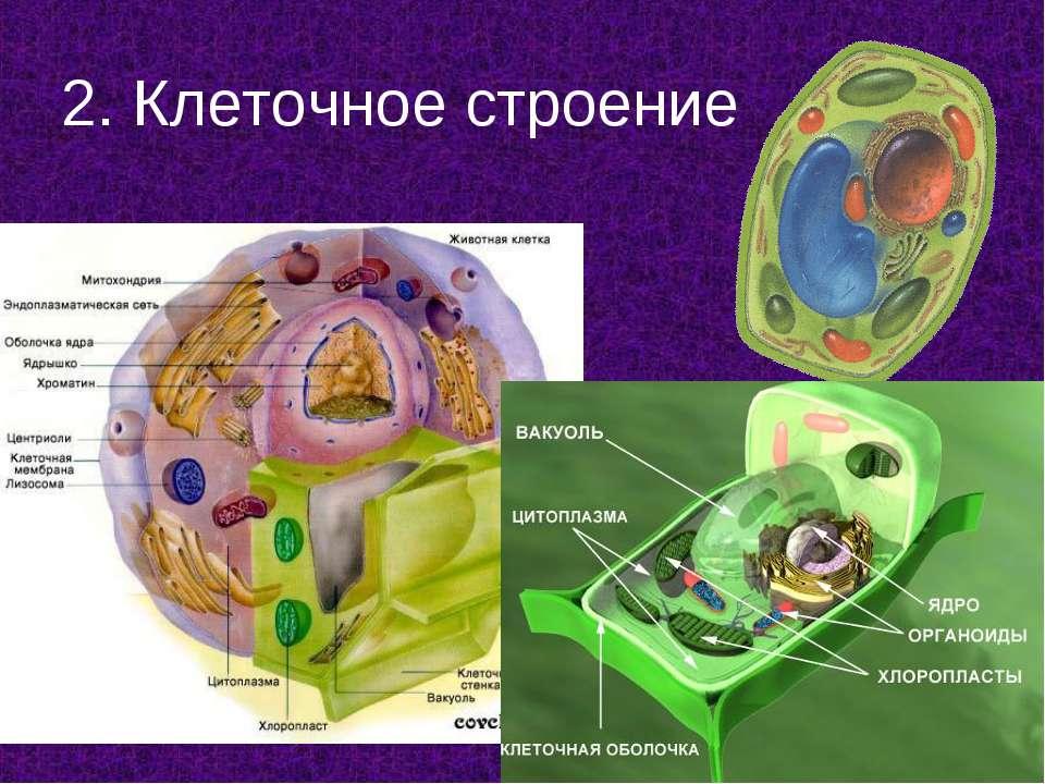 2. Клеточное строение