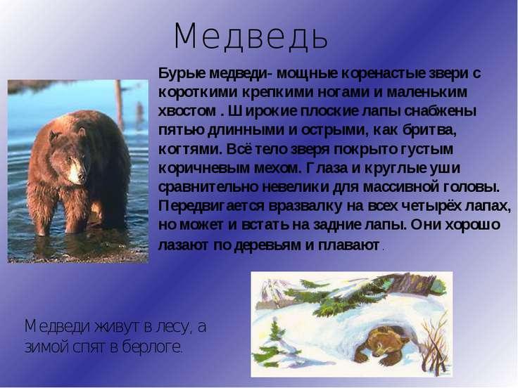 Медведь Бурые медведи- мощные коренастые звери с короткими крепкими ногами и ...