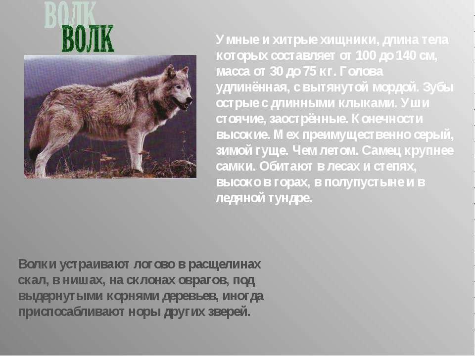 Умные и хитрые хищники, длина тела которых составляет от 100 до 140 см, масса...