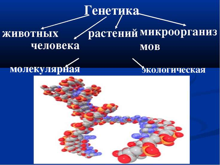 Генетика животных человека растений микроорганизмов молекулярная экологическая