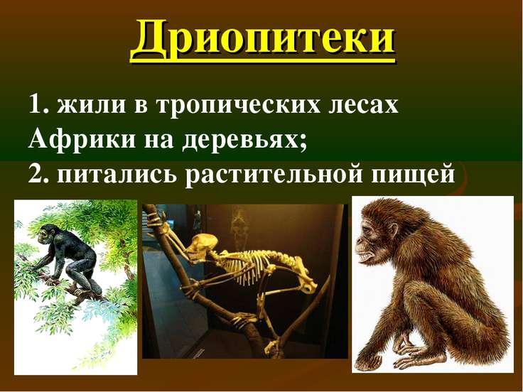 Дриопитеки 1. жили в тропических лесах Африки на деревьях; 2. питались растит...