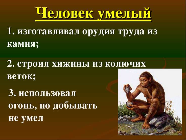 Человек умелый 1. изготавливал орудия труда из камня; 2. строил хижины из кол...