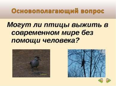 Могут ли птицы выжить в современном мире без помощи человека?